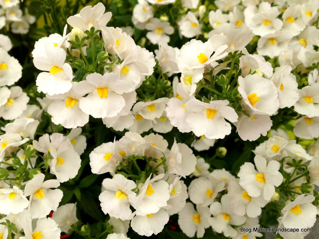 White With Yellow Center Flower Images Flower Decoration Ideas